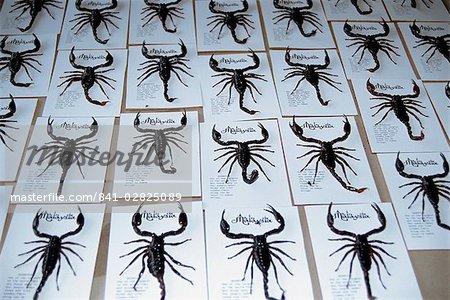Usine insecte, Malaisie, Asie du sud-est, Asie