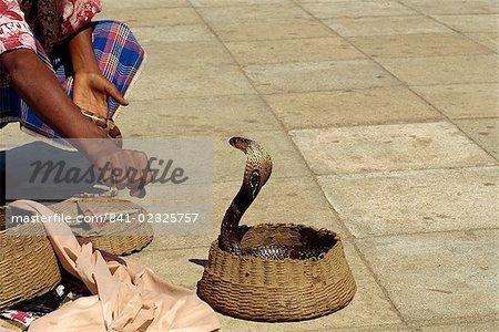 Snake charmer on the waterfront, Colombo, Sri Lanka, Asia