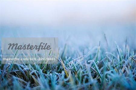 Close-up of Frost on Grass, Skovby, Region Midtjylland, Jutland Peninsula, Denmark