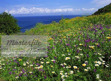 Fleurs sauvages au printemps chez Zingaro Nature Reserve, Sicile, Italie, Méditerranée, Europe