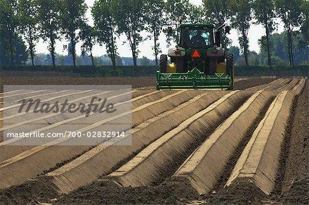 Agriculteur labourant les champs, Wolphaartsdijk, Zeeland, Pays-Bas