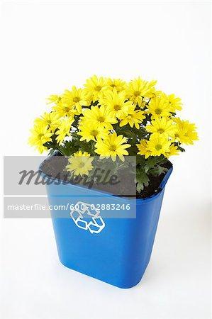 Flowers Planted in Recycling Bin