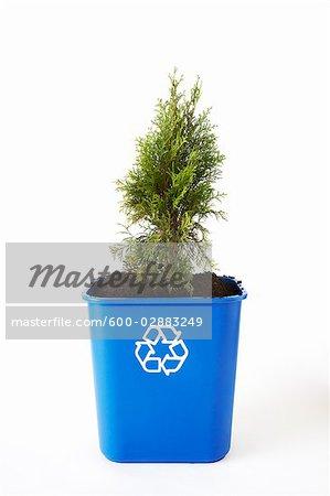 Tree Planted in Recycling Bin