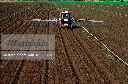 Spraying String Bean Crop