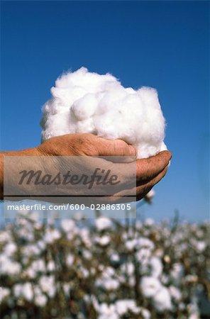 Gros plan des mains tenant Cotton, Australie