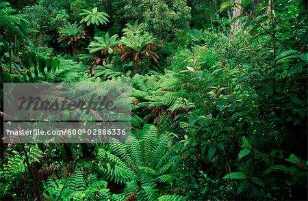 Forêt pluviale, fougères, France
