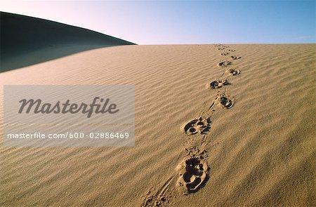 Traces sur la Dune de sable, désert