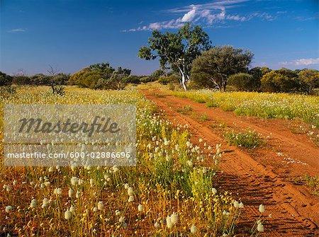 Wooleen Station, Murchison, Western Australia, Australia