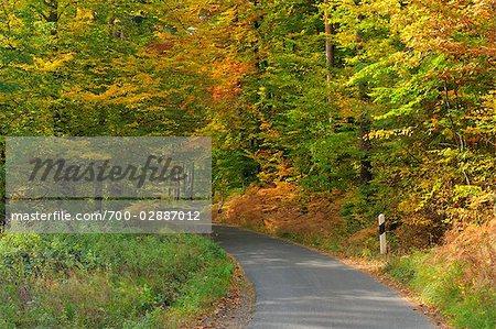 Chemin à travers la forêt, Odenwald, Hesse, Allemagne