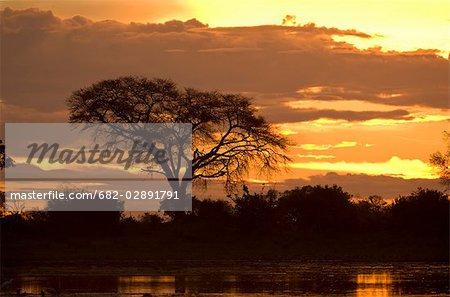 Coucher du soleil avec la silhouette arbre, ses réserves, Botswana