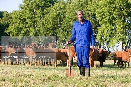 Ouvrier agricole s'élève à la bêche devant un troupeau de bovins, des Midlands, Province du KwaZulu Natal, Afrique du Sud