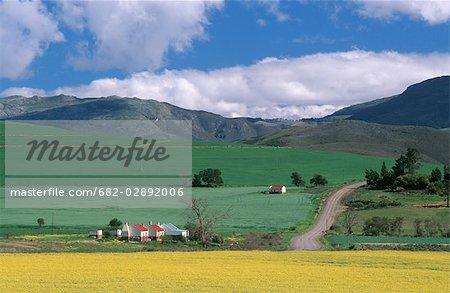 Farm Cottages et roulement champs vert & jaune