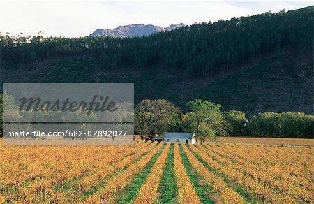 Vignoble et Cottage Scenic