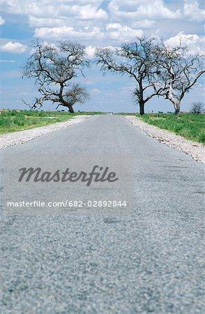 Route goudronnée reliant les deux arbres