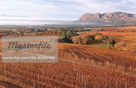Vignoble automne Scenic - haut Angle vision