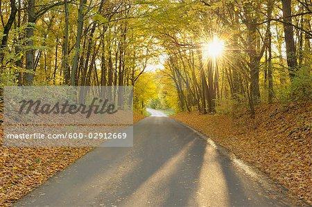 Road Through Gramschatzer Wald, Bavaria, Germany