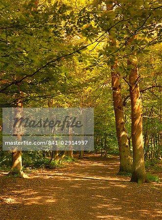 Woodland walk, Trent Park Country Park, près de Cockfosters, au nord de Londres, Angleterre, Royaume-Uni, Europe