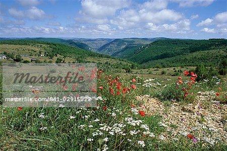 Causse Mejean, Gorges du Tarn, derrière, Lozère, Languedoc-Roussillon, France, Europe