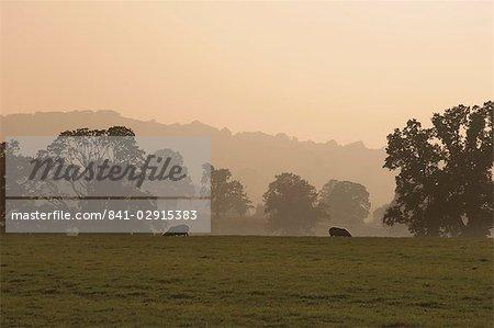 Des terres agricoles de moutons à partir du sentier de Cotswold Way, village de Stanway, les Cotswolds, Gloucestershire, Angleterre, Royaume-Uni, Europe