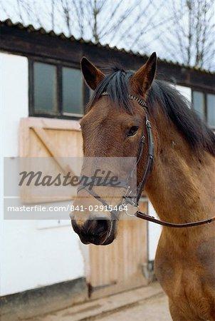 Flash Reithalfter auf Pferd, England, Vereinigtes Königreich, Europa