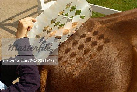 Haar-Dekoration auf Pferd, England, Vereinigtes Königreich, Europa
