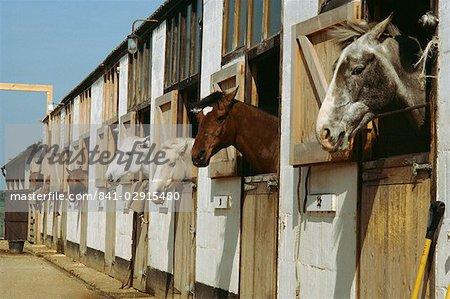 Pferde in den Ställen, England, Vereinigtes Königreich, Europa