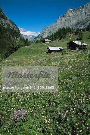 Frühsommer Wiesenblumen, Gasterntal oberhalb Kandersteg, Berner Obereland, Schweizer Alpen, Schweiz, Europa