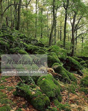 Strutta Wood, près de pont de Ashness, Borrowdale, Lake District, Cumbria, Angleterre, Royaume-Uni, Europe