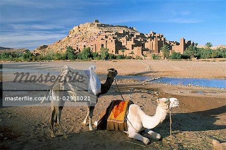Chameaux de berge avec Kasbah Ait Benhaddou (Ait-Ben-Haddou), l'UNESCO patrimoine de l'humanité, en arrière-plan, près de Ouarzazate, au Maroc, en Afrique du Nord, Afrique