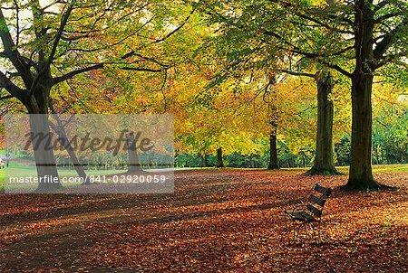 Arbres en couleurs d'automne et banc de parc, à côté d'un chemin d'accès à Clifton, Bristol, Angleterre, Royaume-Uni, Europe