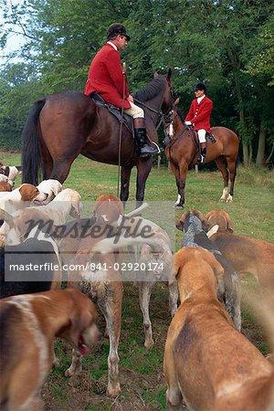 Fox hunting, Essex, England, United Kingdom, Europe