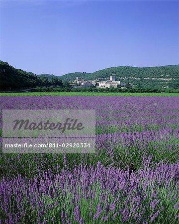 Champs de lavande et le village de Montclus, Gard, Languedoc-Roussillon, France, Europe