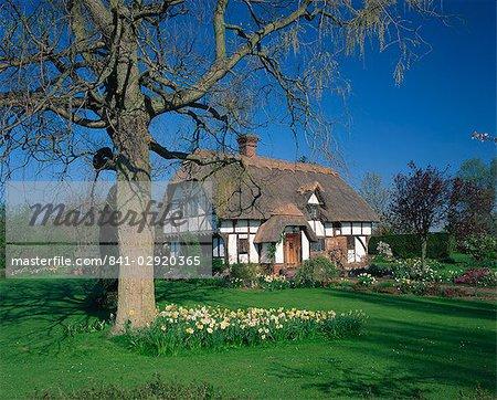 Les colombages de chaumière et jardin avec des fleurs de printemps à Cheltenham, près de Maidstone, Kent, Angleterre, Royaume-Uni, Europe