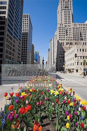 Tulipes sur North Michigan Avenue, du Magnificent Mile, Chicago, Illinois, États-Unis d'Amérique, Amérique du Nord