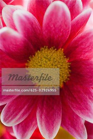 Gros plan d'une fleur