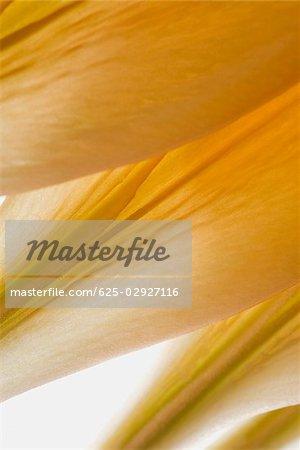 Gros plan de détail de pétales de fleurs