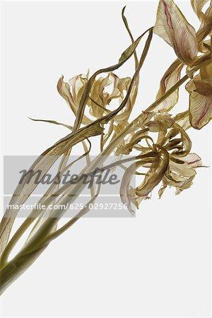 Gros plan de fleurs séchées