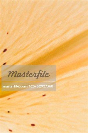 Gros plan d'un jaune pétale d'une fleur