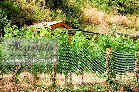 Grillage de clôture dans un champ, Parc National des Cinque Terre, La Spezia, Ligurie, Italie