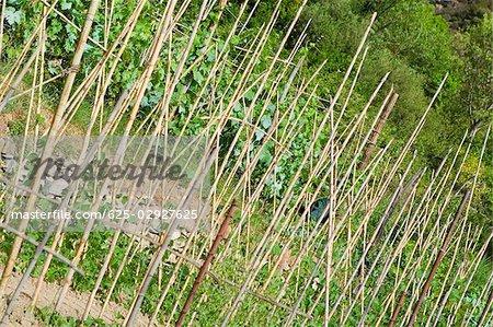 Close-up of a fence, La Spezia, Liguria, Italy