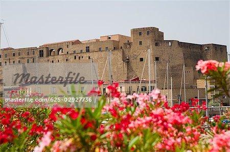 Gros plan de fleurs avec un château en arrière-plan, Castel dell ' Ovo, Baia di Napoli, Naples, Province de Naples, Campanie, Italie