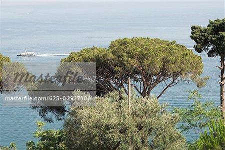Trees at the seaside, Costiera Amalfitana, Salerno, Campania, Italy