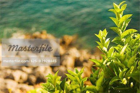 Close-up of plants, Costiera Amalfitana, Salerno, Campania, Italy
