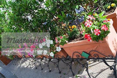 High angle view of potted plants, Vietri sul Mare, Costiera Amalfitana, Salerno, Campania, Italy