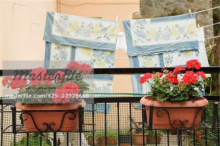 Pots de fleurs avec corde à linge en arrière-plan, Via Colombo, RioMaggiore, Cinque Terre, La Spezia, Gênes, Ligurie, Italie