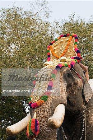 Elephant dressed for hindu carnival
