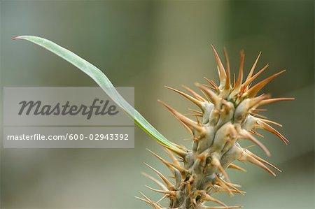 Gros plan des Cactus à feuilles