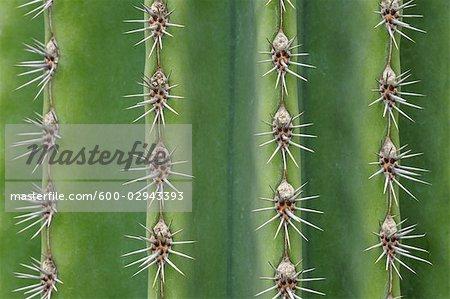 Close-up of Organ Pipe Cactus