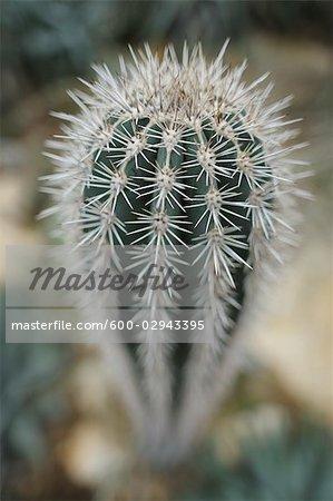 Gros plan de Cactus