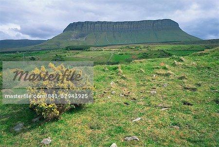 Bush d'ajonc et champs ci-dessous la montagne Benbulben dans le comté de Sligo, Connacht, Irlande, Europe